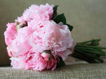 Langage des fleurs : que signifient leurs couleurs ?