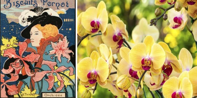 Langage des fleurs : symbole et histoire de l'Orchidée
