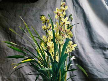 comment faire refleurir une orchid e premi re tape coupez la tige de votre orchid e femme. Black Bedroom Furniture Sets. Home Design Ideas