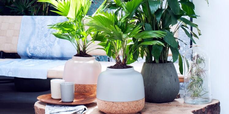 Le palmier, plus qu'un simple atout déco
