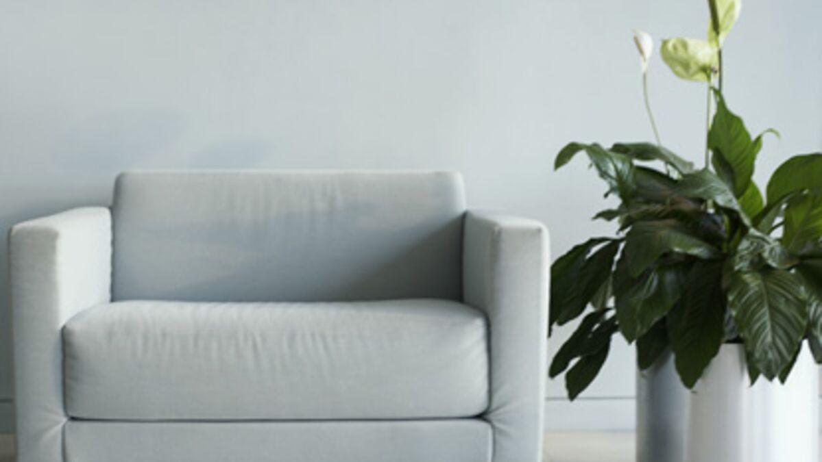 Plante D Intérieur Tendance le zamioculcas, plante tropicale indestructible - les