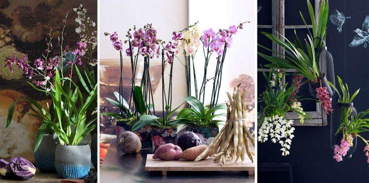 Orchidées : trois variétés surprenantes pour la maison