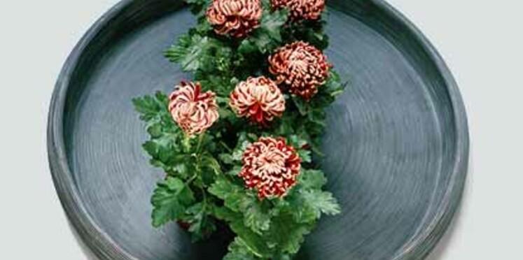 Le chrysanthème : la plante du mois de septembre