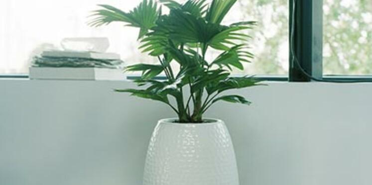 Les plantes pour vérandas