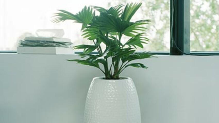 Quelles plantes vertes installer dans une véranda
