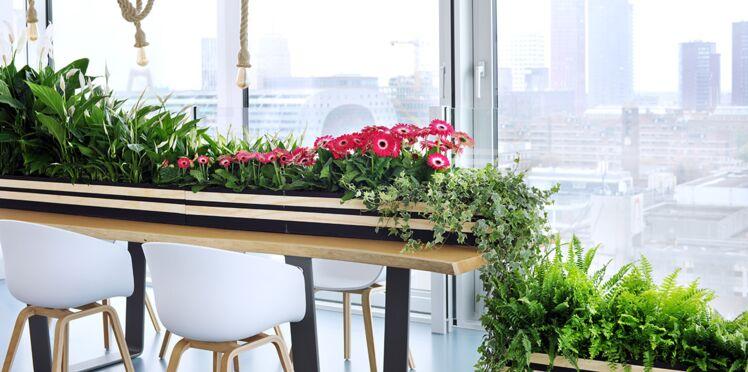 Quatre plantes d'intérieur qui nous font du bien