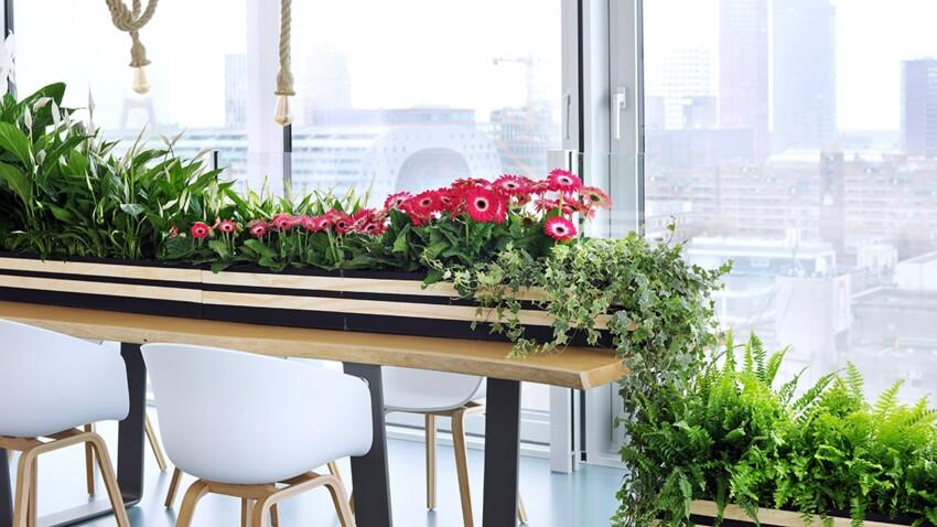 Quatre plantes d'intérieur qui nous font du bien en dépolluant l'air ambiant