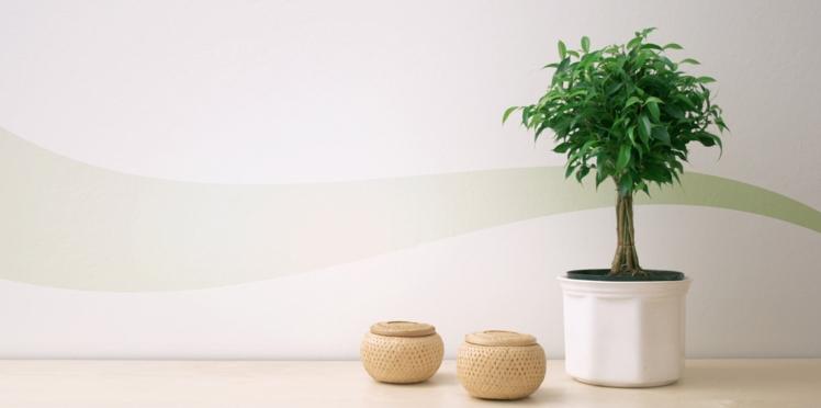 Plantes et fleurs pour une maison Feng Shui