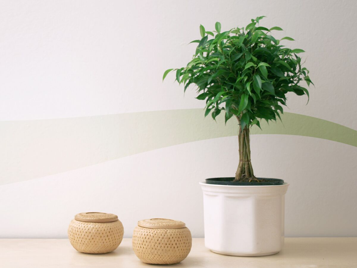 Plantes Et Fleurs Pour Une Maison Feng Shui Femme Actuelle Le Mag
