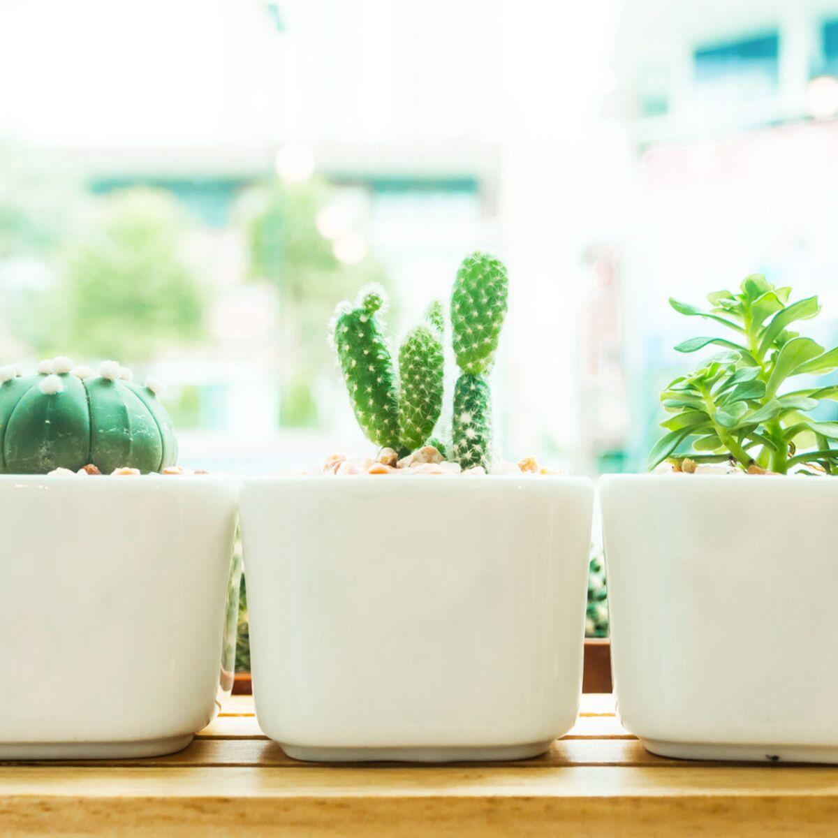 Comment Entretenir Une Plante Aloe Vera plantes grasses : comment les entretenir ? : femme actuelle