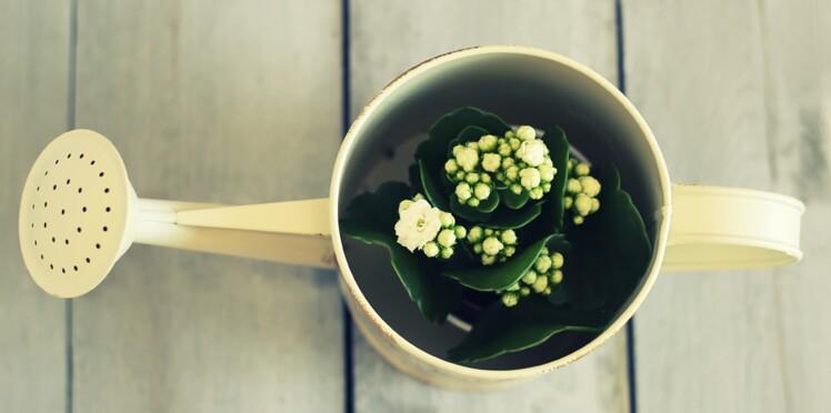 Plantes d'intérieur : des pots originaux à faire soi-même