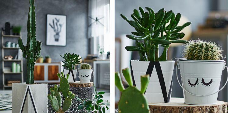 Plantes sans entretien : le top 5 des increvables