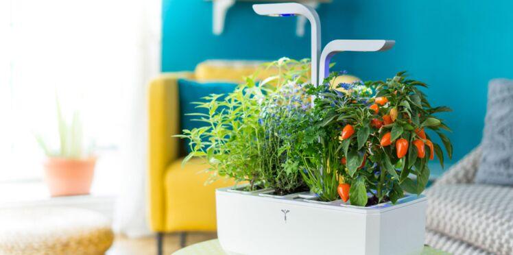 Potager, aromatique : cap sur la jardinière d'intérieur