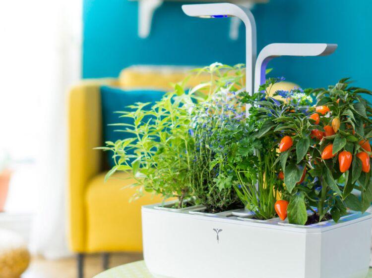 potager aromatique cap sur la jardini re d int rieur femme actuelle le mag. Black Bedroom Furniture Sets. Home Design Ideas