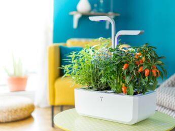 comment faire un jardin l anglaise femme actuelle le mag. Black Bedroom Furniture Sets. Home Design Ideas