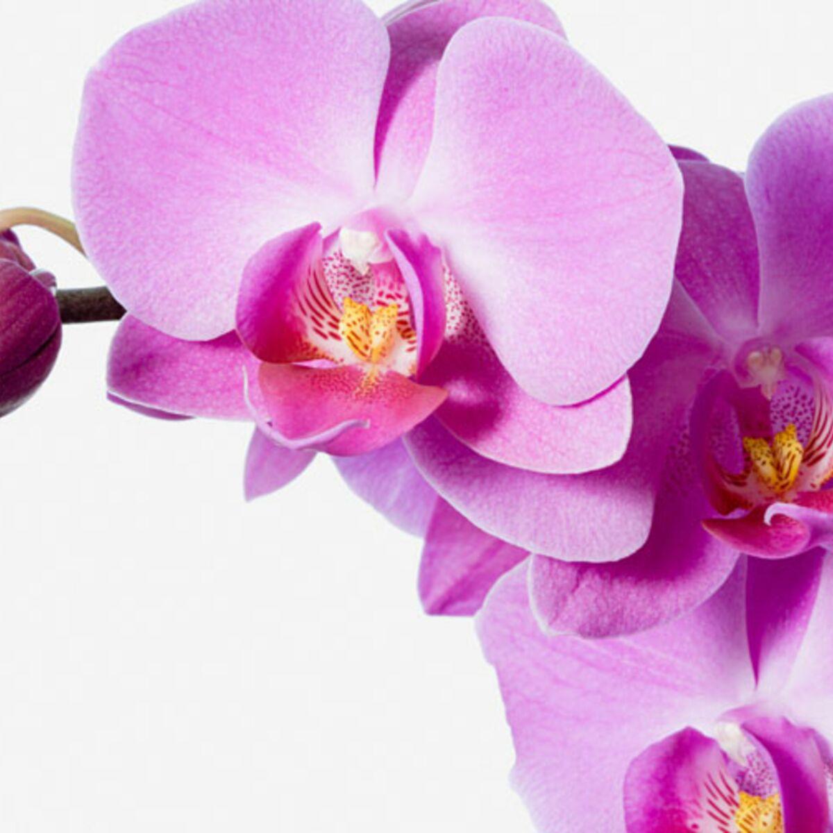 Comment Planter Une Orchidée comment entretenir les orchidées - la température idéale