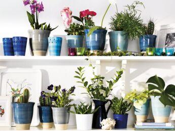 Quelle musique faire écouter à vos plantes d'intérieur ?