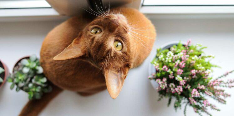 Quelles plantes choisir quand on a un chat ?