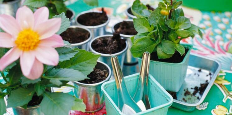 Quand faut-il rempoter ses plante d'intérieur ?