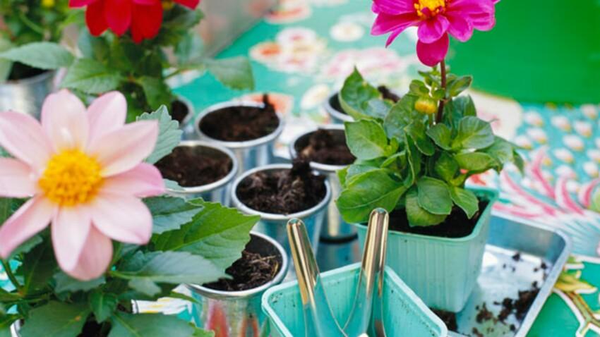 Quand faut-il rempoter ses plantes d'intérieur ?