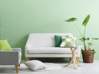 Ma plante verte est malade, comment la soigner ?