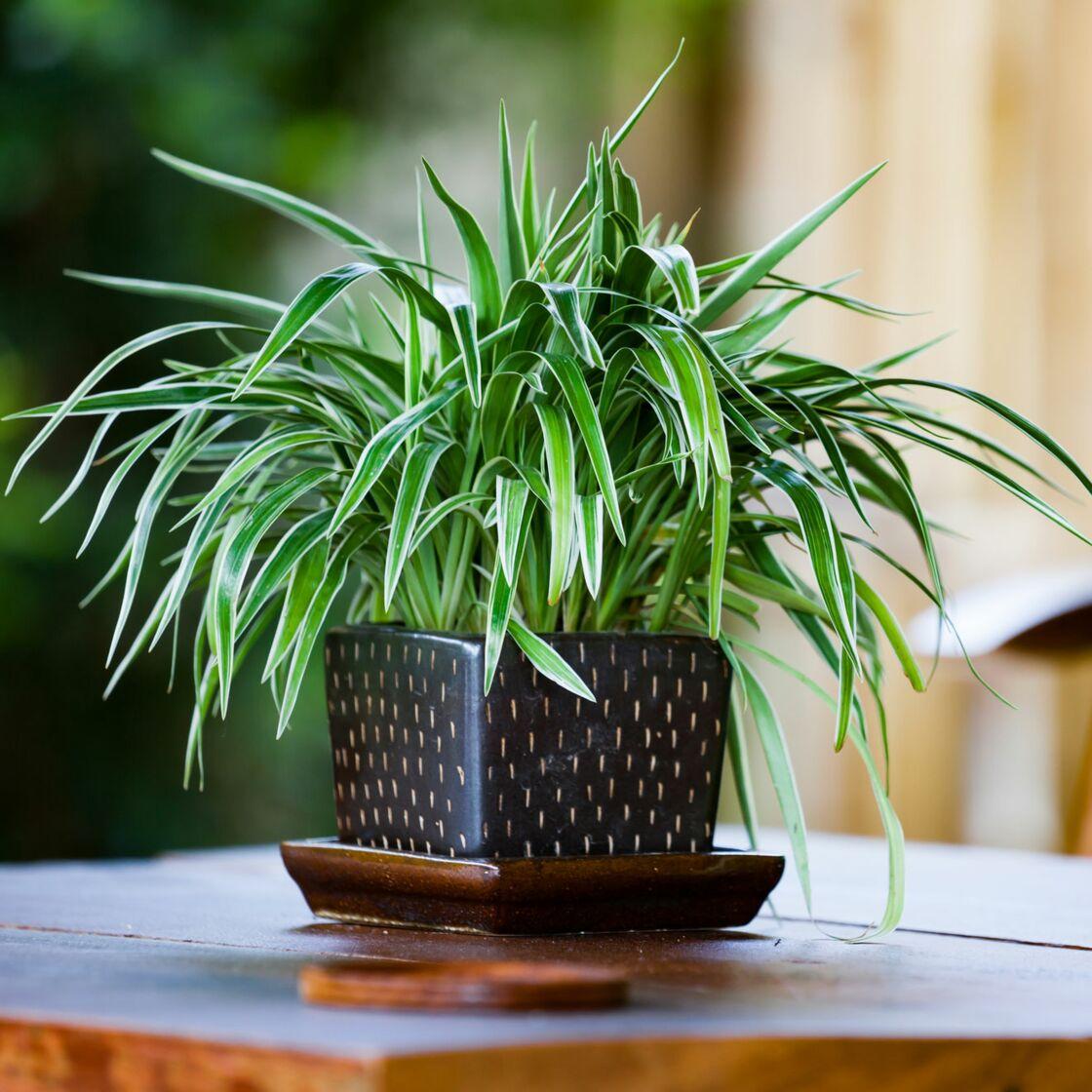 Quelles plantes choisir pour ma salle de bain femme actuelle le mag - Plante pour salle de bain ...