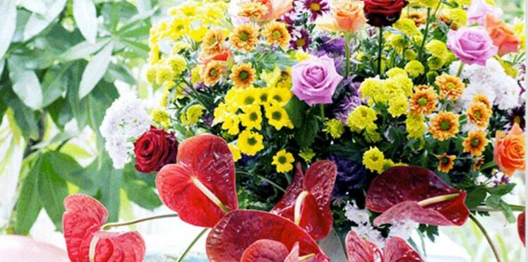 Chrysanthème : nos conseils pour bien les conserver