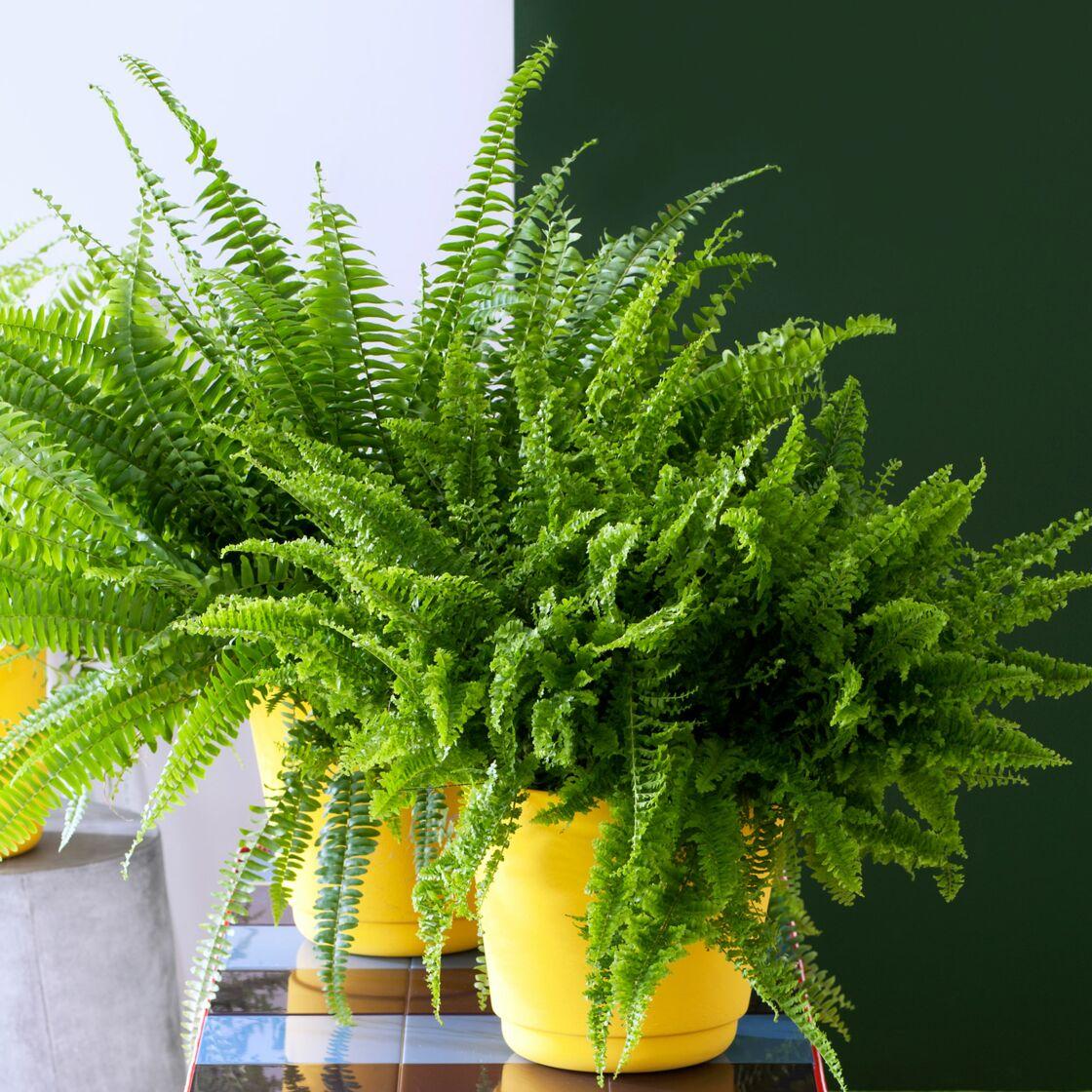 Quelles plantes choisir pour ma salle de bain femme actuelle le mag - Salle de bain tropicale ...