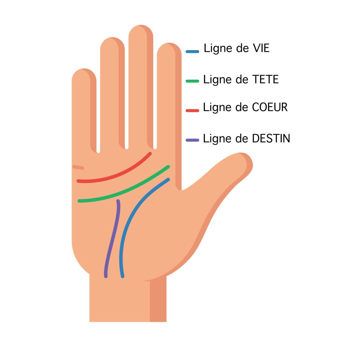 14f4f82172 Chiromancie : comment lire les lignes de la main ? : Femme Actuelle ...
