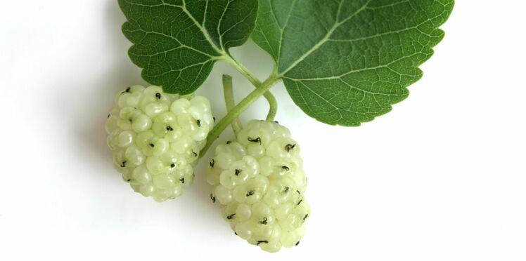 La mûre blanche, un super fruit pour perdre du poids