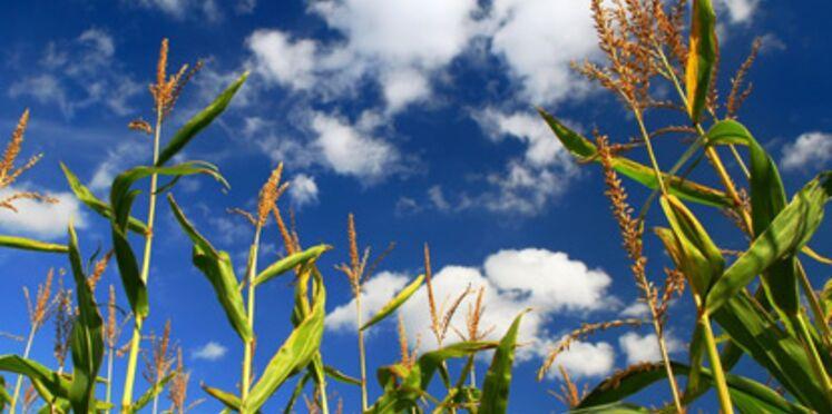 OGM : le point sur les dangers réels