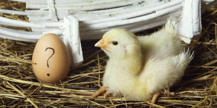 Pain, œufs, lait, fruits : les aliments de base, pas si anodins pour notre santé