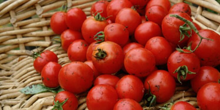 Vive les tomates bio!