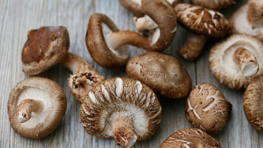 The health benefits of the shiitake mushroom: Femme Actuelle Le MAG