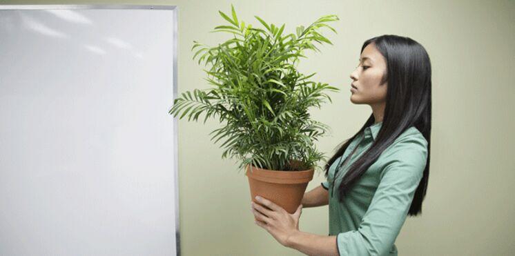Phytothérapie : des plantes pour affronter la rentrée du bon pied