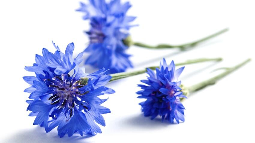 L'eau de bleuet, un anti-inflammatoire naturel