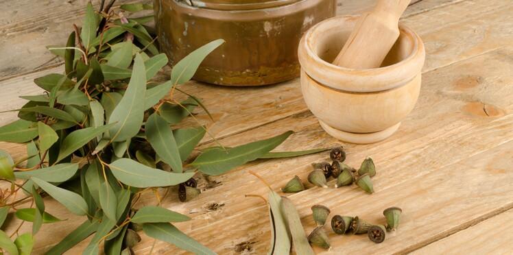 L'eucalyptus, l'allié des voies respiratoires