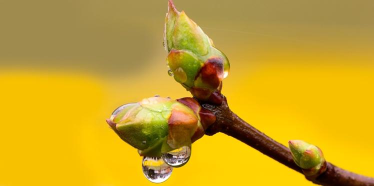 Gemmothérapie : se soigner avec les bourgeons