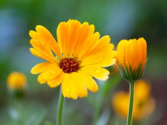 Homéopathie : les indispensables de l'été