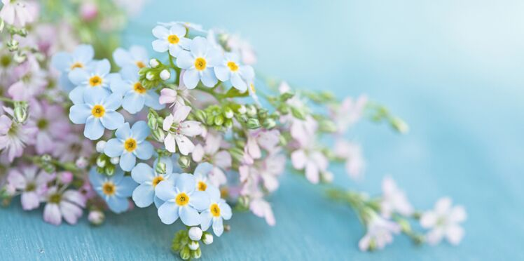 5 recettes pour se soigner avec du thym