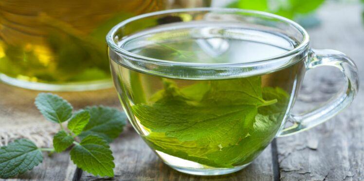 La menthe poivrée : digestive et apaisante