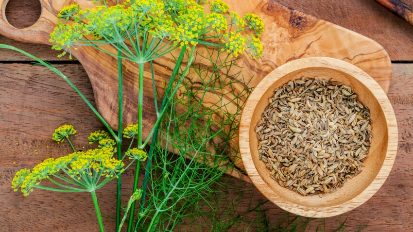 Fennel for better digestion: Current Woman The MAG