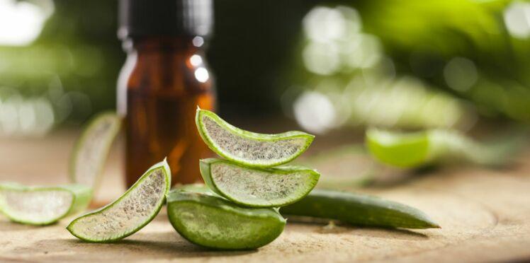 Peaux grasses : l'aloe vera, une solution naturelle anti-acné