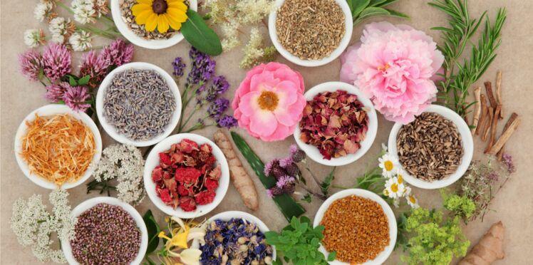 Phytothérapie: les bons conseils pour l'automédication