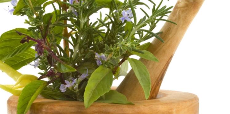Les plantes à l'assaut du cholestérol