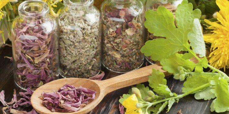 5 plantes qui nous aident à retrouver le sommeil