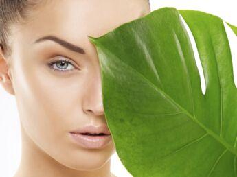 6 plantes spécial vitalité
