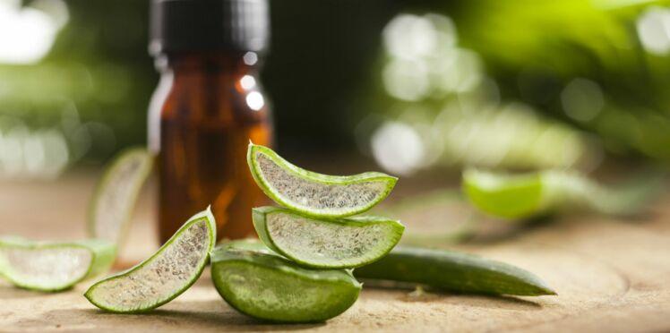 7 remèdes naturels à base d'aloe vera