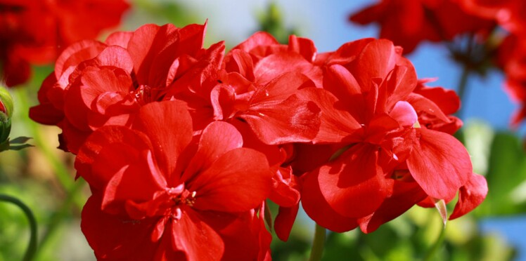 6 recettes maison pour se soigner avec les plantes du jardin