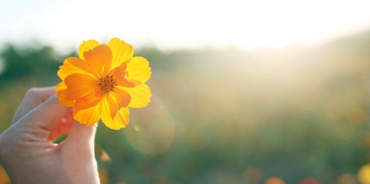 Des plantes pour soigner les maux du quotidien